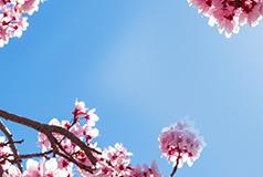 Boka nu - Betala i vårBoka drömresan idag - betala i vår! Förlängd betalningstid till 30 april. Boka idag, luta dig tillbaka och se fram mot semestern.
