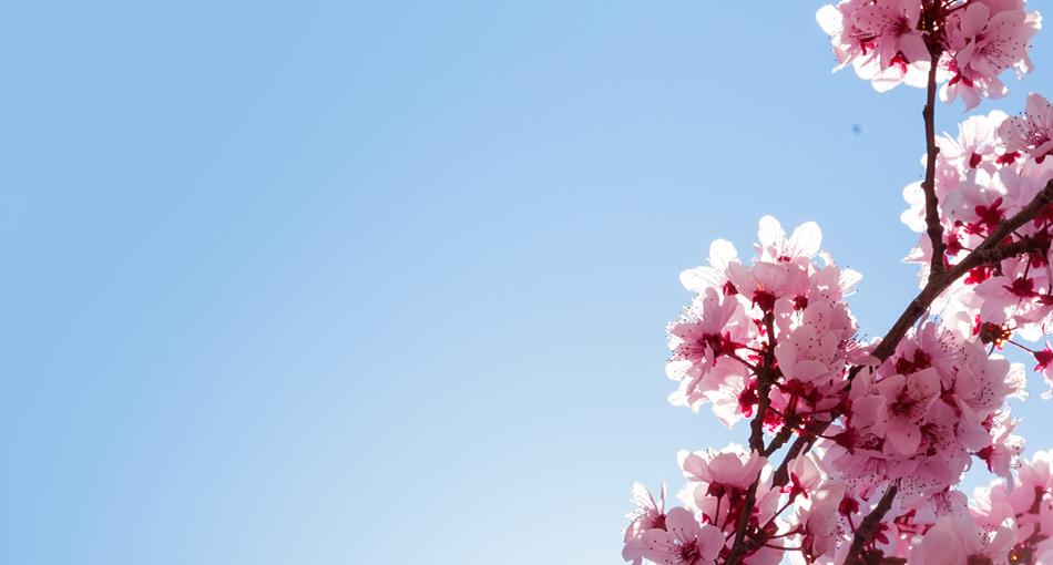 Boka din drömresa idag - betala sista april!Boka senast sista februari!