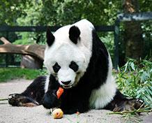 Zoo BerlinIhana eläintarha, jossa on gorilloja, virtahepoja, pandoja ja paljon muita jännittäviä eläimiä.Vieressä on myös akvaarium, jossa on trooppisia kaloja, krokotiilejä ym. vesieläviä. Avoinna: Ympäri vuoden