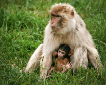 Givskud ZooHer møder du dyr fra hele verden. Tag på safari i Afrika og Nordamerika med egen bil eller safaribus. På bussen fortæller chaufføren interessant fakta om dyrene. Åbningstider: Marts til og med oktober.