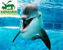 Kolmårdens dyrepark Et av Sveriges mest populære reisemål for barnefamilier. Stort zoo med fantastiske dyr og mange aktiviteter. Åpningstider: april - september.