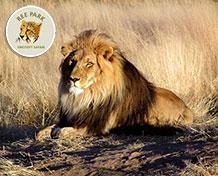 Reepark Ebeltoft SafariparkParken ligger 10 km fra Ebeltoft og strækker sig over et stort, naturskønt område med skov og søer. Her findes ca. 80 forskellige dyrearter hvor 25 af dem indgår i et internationalt avlsprogram. Åbningstider: Marts til og med oktober.