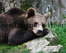 Skånes djurpark Populärt zoo i Södra Sveriges med fler än 80 nordiska djurarter i vacker natur, pluss en mängd andra aktiviteter. Öppetider: året om.