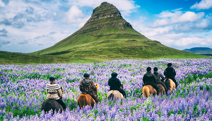 horses iceland rel=