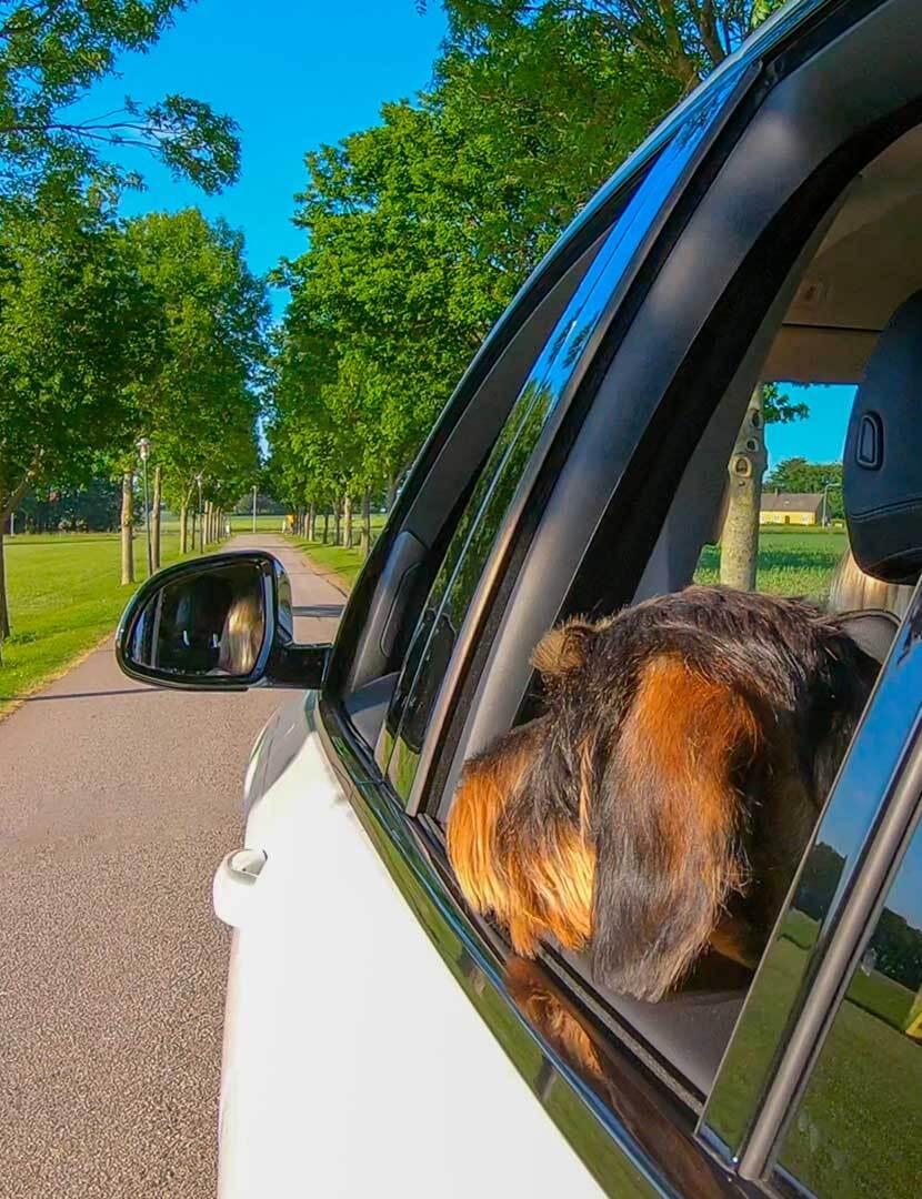 Hundevenlige roadtripsTil dig og din bedste ven