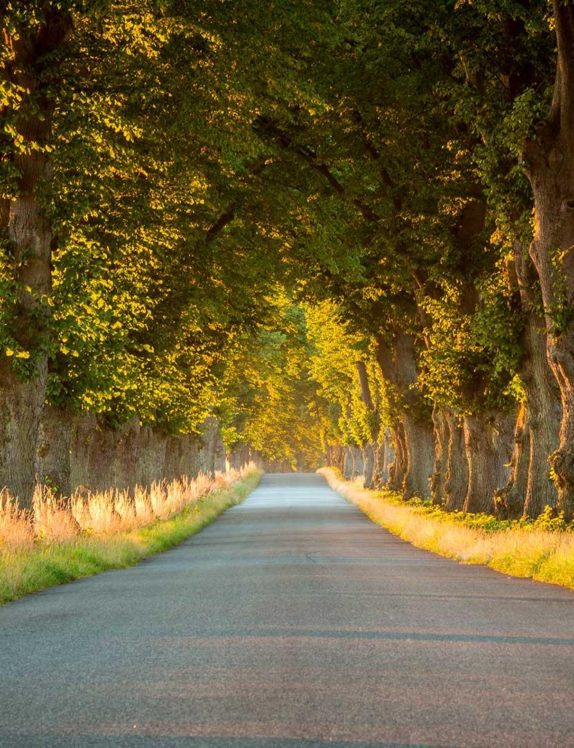 Roadtrip i DanmarkUnderbara upplevelser väntar hos vår granne